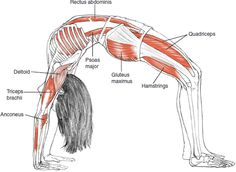 10. Urdhva Dhanurasana चक्रासन Upwards facing bow