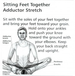 12. Butterfly Pose Puna titali Asan Sitting Feet Together Adductor Stretch